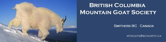 British Columbia Mountain Goat Society Smithers BC Canada